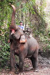 [Foto] Dr. Ludwig auf einem Elefanten