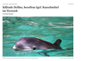 [Foto] kiffende-delfine